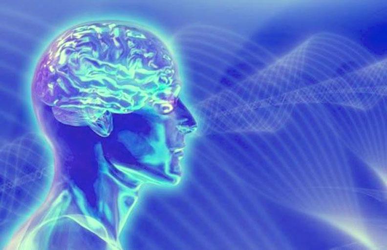 Circuit Brain Reusable : The circuit brain by antero alli